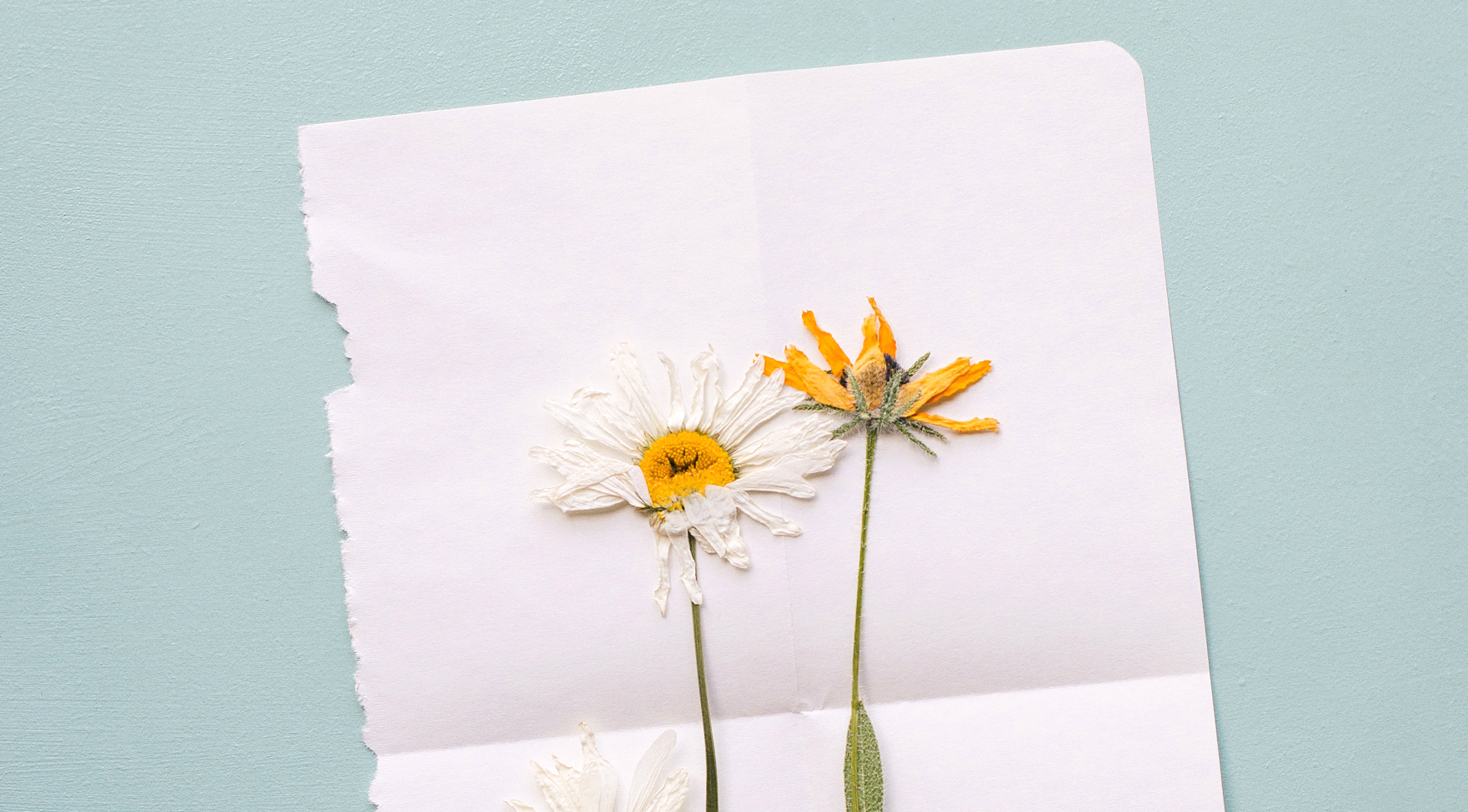 Pressed wild flowers. Paper on the Rocks is part of The Pollinators's Nationale Zaaicoalitie, which aims to make the Netherlands into a true bee paradise.